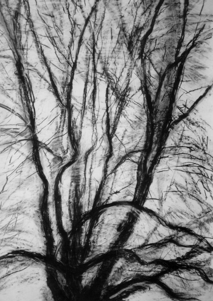 Tree 2 Winter 96 145 X 113