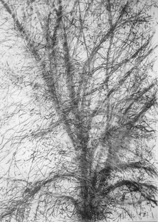 Tree 3 Spring 97 150 X 110